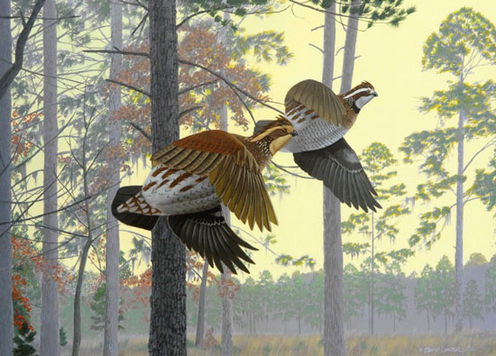 Quails in Flight