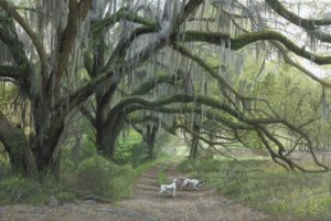 Deep South Pointers