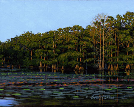 Evening on Cypress Pond